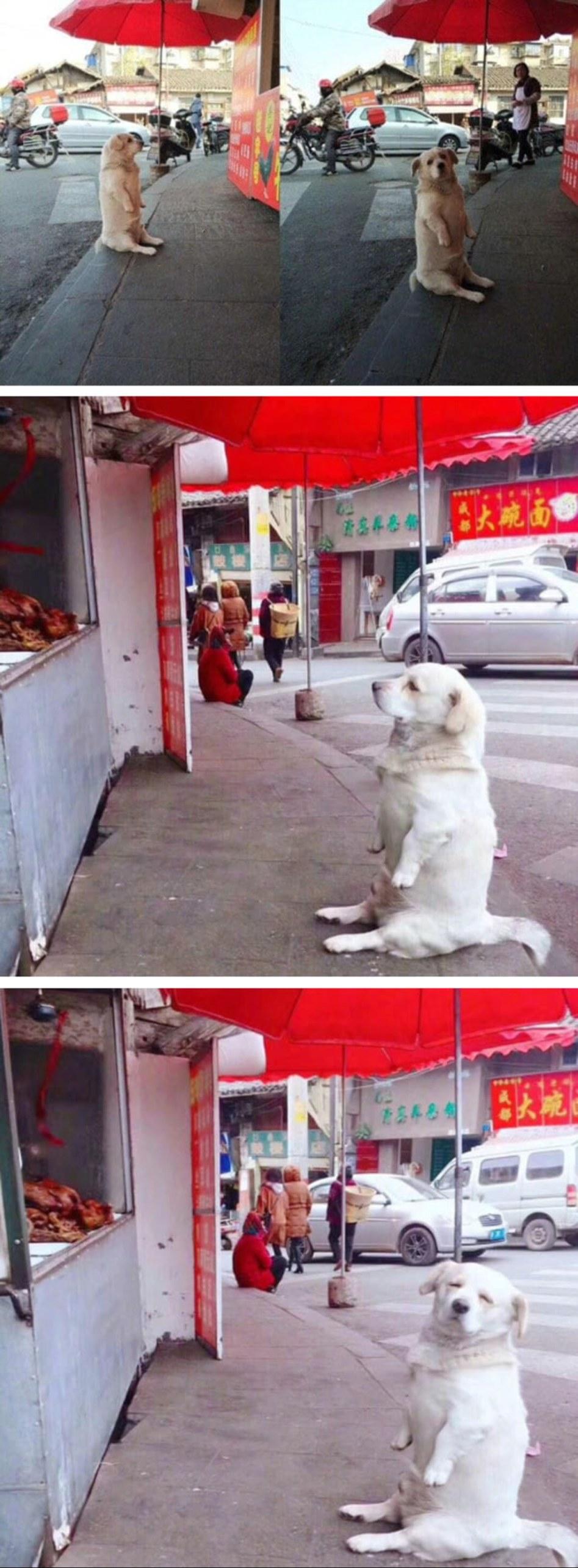 Doggo+shamelessly+begging+for+food_b884b4_6494200.jpg